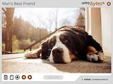 SafetyBytes® - Encountering Dogs (Determine the Situation)